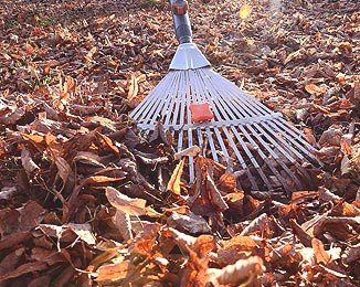 leaf clearance bolton